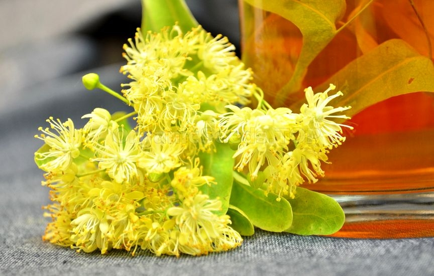 Benefits of Linden Flowers