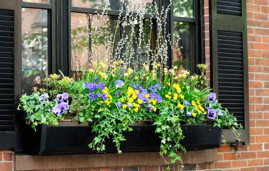 perennial Window Boxes