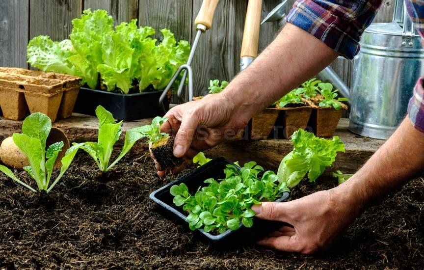 Vegetable Gardening in the Summer