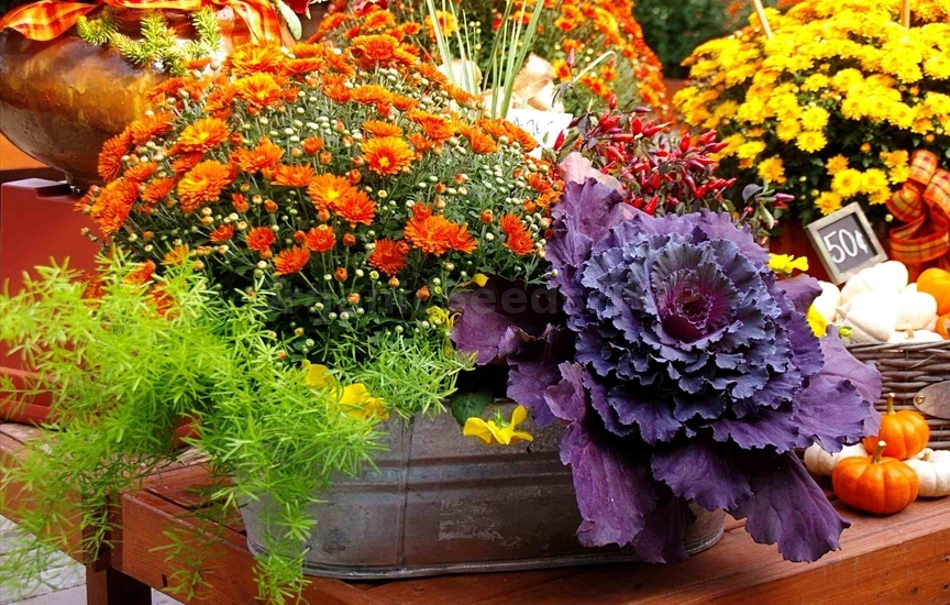 10 Favorite Flowers for the Fall Landscape