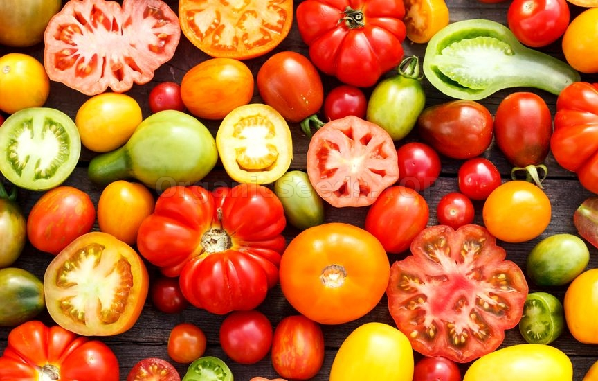 A Guide to Heirloom Tomatoes
