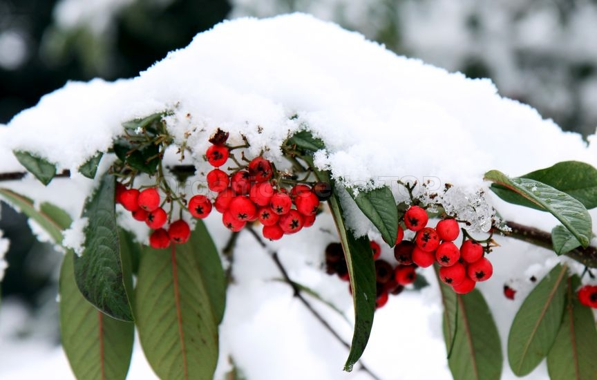 7 Simple Steps To Winterize Your Garden
