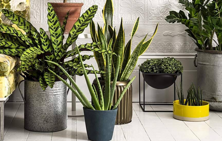 Which Houseplants Are Best for Cleaning the Air?