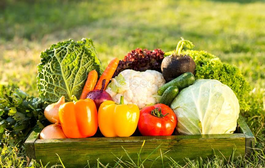 16 Tips to Get an Organic Vegetable Garden