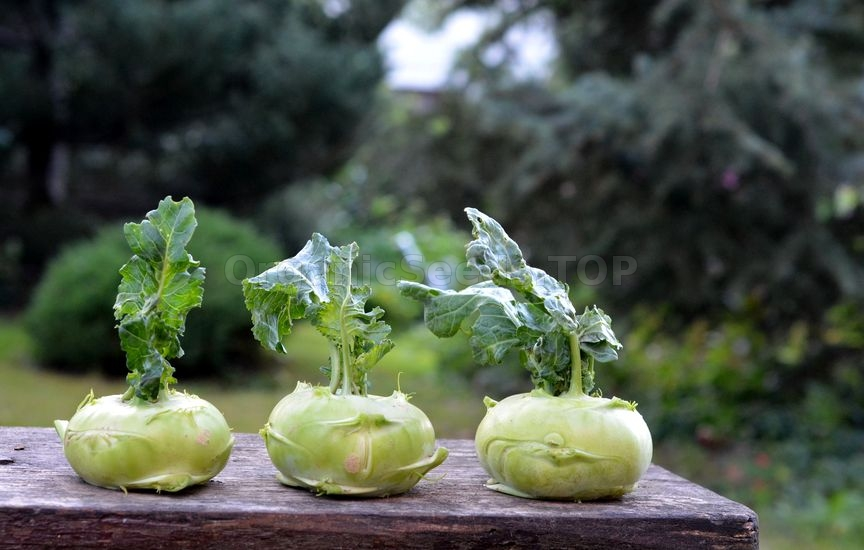 Benefits of Kohlrabi