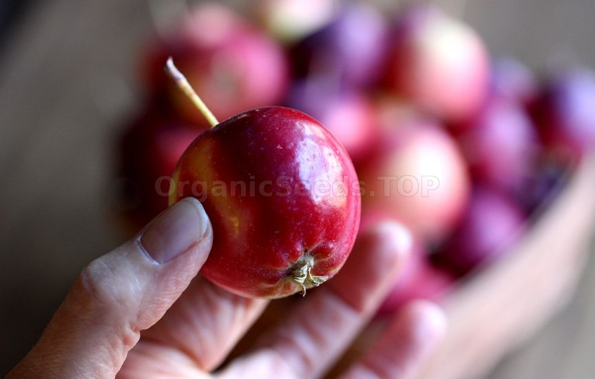 How to Grow Crabapple
