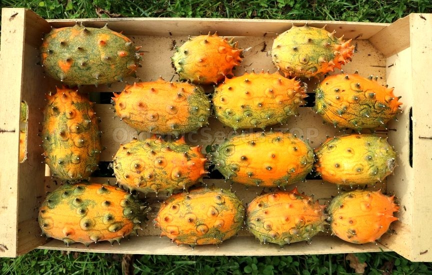 10 Benefits Of Kiwano