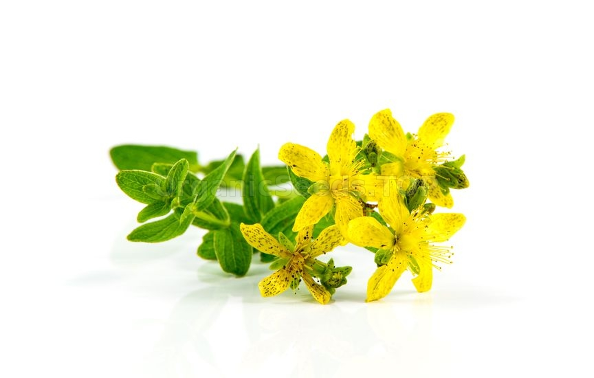 The Health Benefits of St. John's Wort