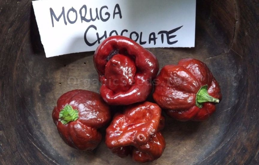 Trinidad Scorpion Chocolate: Mellower Madness