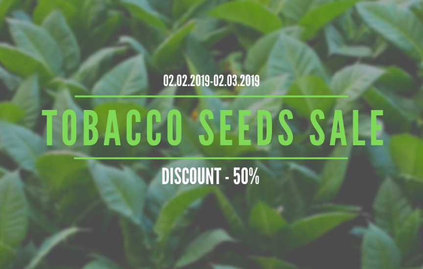 Tobacco Seeds Sale