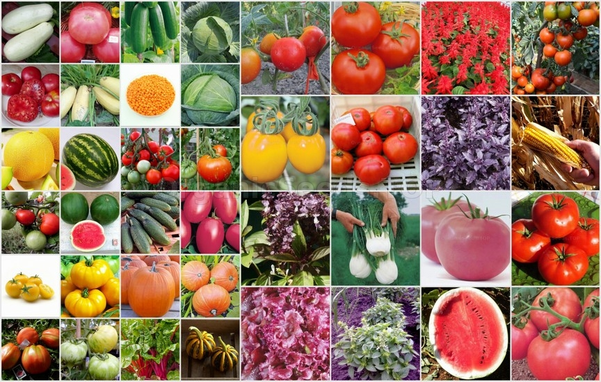Novelties of heirloom seeds for the Second week of Jule 2020