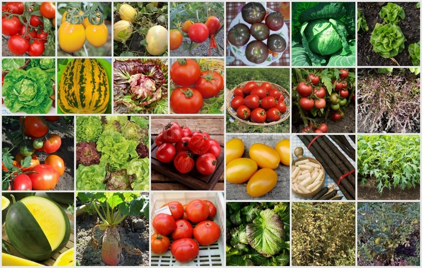 Novelties of heirloom seeds for the Third week of Jule 2020