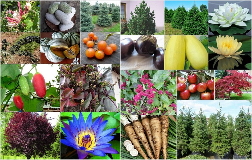 Novelties of heirloom seeds for the Fourth week of November 2020
