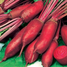 «Rival» - Organic Beetroot Seeds
