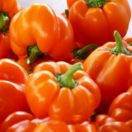 «Golden Pheasant» - Organic Pepper Seeds