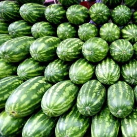 «Producer» - Organic Watermelon Seeds