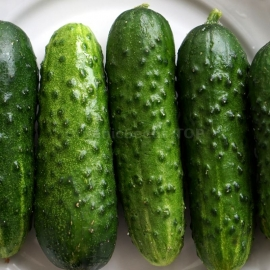 «Shruby» - Organic Cucumber Seeds