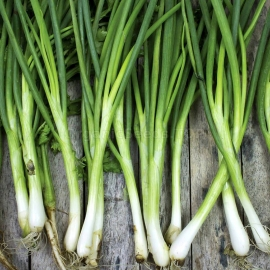 «Laser» - Organic Scallion Seeds