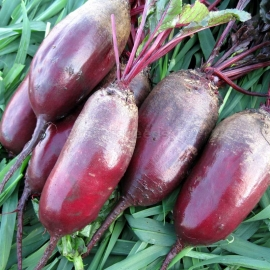 «Vital» - Organic Beetroot Seeds