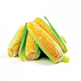 «Gourmand» - Organic Corn Seeds