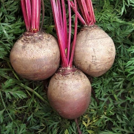 «Red Ball» - Organic Beetroot Seeds