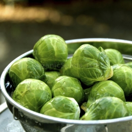 «Hercules» - Organic Brussels sprout Seeds