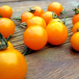 «Cherry Orange» - Organic Tomato Seeds