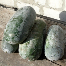«Canton Pride» - Organic Wax Gourd Seeds