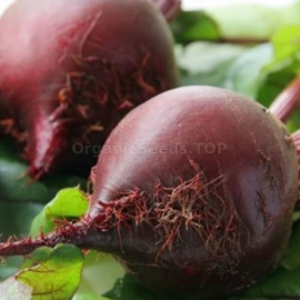 «Unparalleled» - Organic Beetroot Seeds