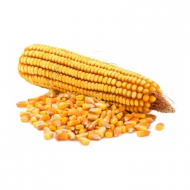 «Kadr 267MB» - Organic Corn Seeds