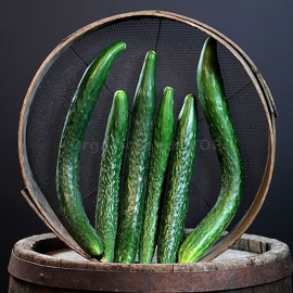 «Chinese Cold Resistant» - Organic Cucumber Seeds
