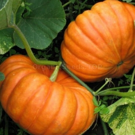 «Candy» - Organic Pumpkin Seeds