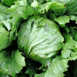 «Evelina» - Organic Salad Seeds