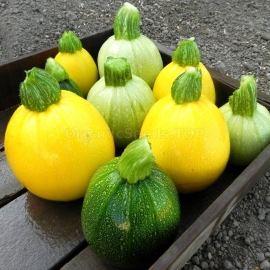 «One Ball» - Organic Squash Seeds