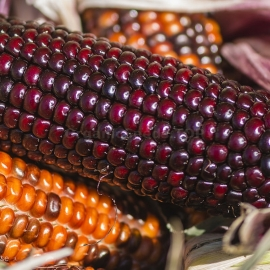 «Chocolate Cherry» - Organic Corn Seeds