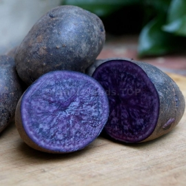 «Purple Majesty» - Organic Potato Seeds