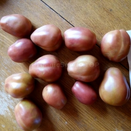 «Pastel Sleeves» - Organic Tomato Seeds