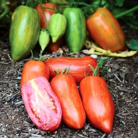 «Roman Striped» - Organic Tomato Seeds
