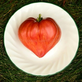 «Crushed Heart» - Organic Tomato Seeds