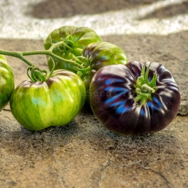 Фото «Lovely Lush» - Organic Tomato Seeds