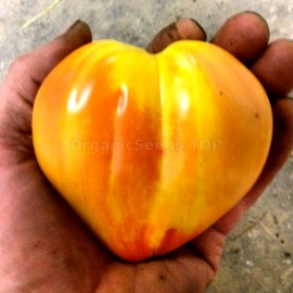 Фото «Bleeding Heart» - Organic Tomato Seeds