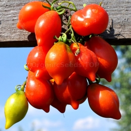 «Mountain Vesuvius» - Organic Tomato Seeds