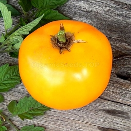 «Golden Sunray» - Organic Tomato Seeds
