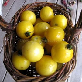 «Red Spot Yellow» - Organic Tomato Seeds