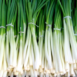 «Japanese Ishikura» - Organic Onion Seeds
