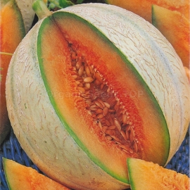 «Sweet tooth» - Organic Melon Seeds