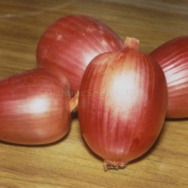 «Amphora» - Organic Onion Seeds
