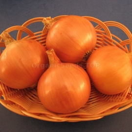 «Varangian» - Ukrainian Heirloom Onion Seeds