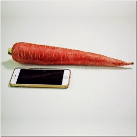 Фото «Red Giant» - Organic Carrot Seeds