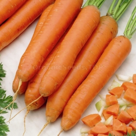 «Without Core» - Organic Carrot Seeds